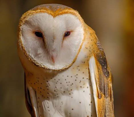Raptor Visits from the Smoky Mountain Raptor Center <br> December 10 & 23 <br>Three Rivers Market