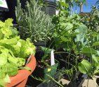 Plants & Seeds!